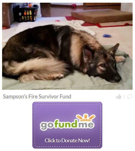 Help Sammy